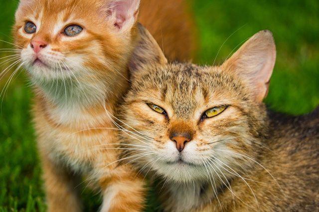 choisir la nourriture pour chatons